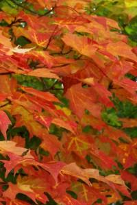 Leaves on the Rail